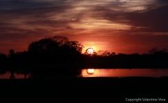 Brazil - Pantanal - 2014